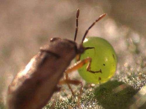 Green leaf volatiles increase plant fitness via biocontrol