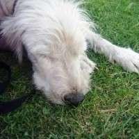 Heat wave means pet precautions