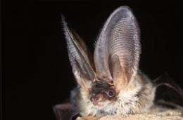 Holy bat detector! Ecologists develop first Europe-wide bat ID tool
