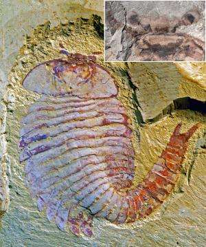 Complex brains evolved much earlier than previously thought, 520-million-year-old fossilized arthropod confirms