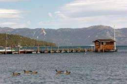 Humans take place at top of food chain, eat crawdads to help Tahoe's ecosystem