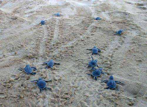 Hundreds of sea turtles hatch each summer on Cyprus' beaches
