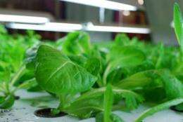 Indoor farming eliminates the need for pesticides and herbicides and protects crops from drought and storm damage