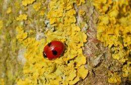 Invasive alien predator causes rapid declines of European ladybirds