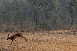 Invasive species have followed humans around the world