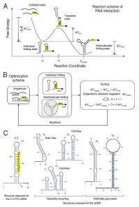 From vitro to vivo: Fully automated design of synthetic RNA circuits in living cells