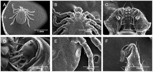 Ticks found able to survive being subjected to electron microscopy