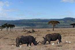 Kenya has the world's third largest rhino population