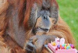 Major celebrates his 50th birthday at the La Boissiere-du-Doree zoo