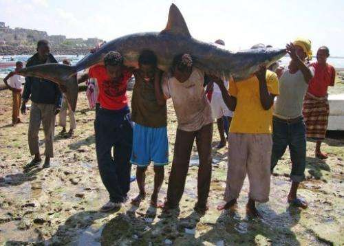 Many fishing agreements ignore the needs of small-scale local fishermen, says the UN