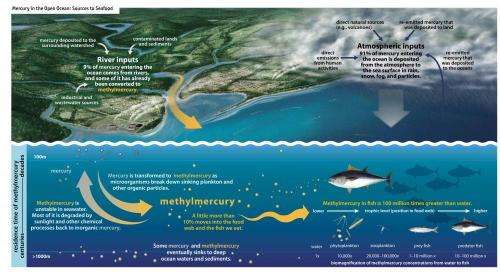 Mercury releases contaminate ocean fish: Dartmouth-led effort publishes major findings