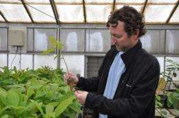 New avocado rootstocks are high-performing and disease-tolerant