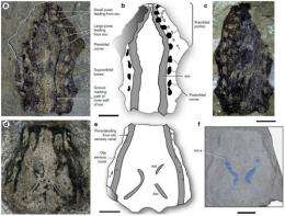 New finding extends the range of anatomically modern coelacanths to the early devonian