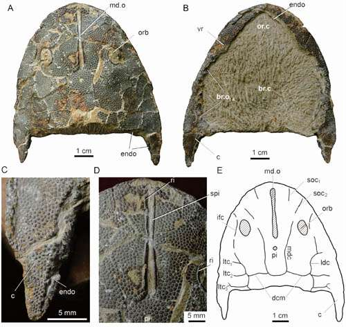New Genus Of Eugaleaspidiforms Found From the Ludlow, Silurian Of Qujing, Yunnan, Southwestern China