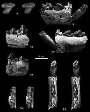 New Mesonychid mammals found from lower Paleogene of Erlian Basin, Nei Mongol