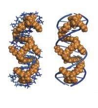 New Molecule Has Potential to Help Treat Genetic Diseases and HIV