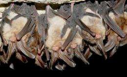 New research highlights: 'Conservation and Management of Eastern Big-Eared Bats'