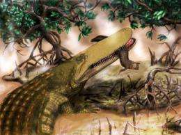 New species of ancient crocodile discovered