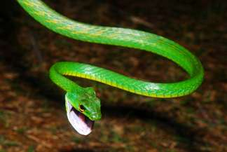 New study reveals surprising evolutionary path of lizards and snakes