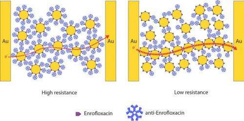 New type of biosensor is fast, super-sensitive