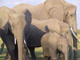 Notre Dame researchers provide fascinating insights into elephant behavior, conservation issues