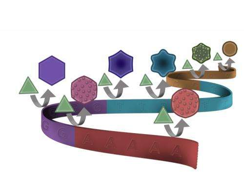 Oh, my stars and hexagons! DNA code shapes gold nanoparticles