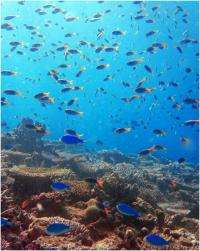 Our coral reefs: in trouble, but tougher than we thought