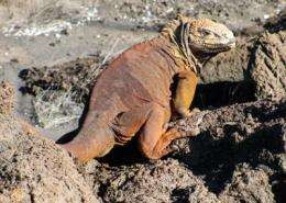 Patterns of antibiotic-resistant bacteria found in Galapagos reptiles