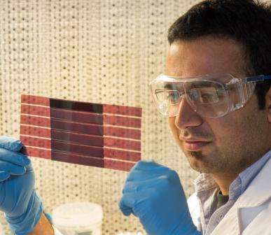 Plastic solar cells pave way for clean energy industry