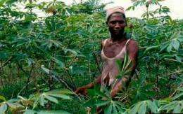 Poisonous toxins a risk to African food security