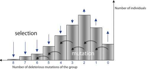 Populations survive despite many deleterious mutations