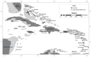 Rising Seas Caused by Glacial Melting Linked to Caribbean Extinction of Bats