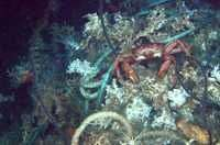 Scientists call for protection of deep sea coral reefs from European fishing fleets