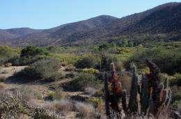 Scientists track Avifauna in coastal Chile's thorn-scrub