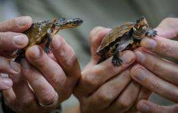 Scores of endangered reptiles including turtles that were smuggled into Hong Kong will be returned to the Philippines