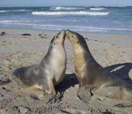 Sea lions fuel ocean life