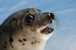 Seals and other marine species are increasingly infected by parasites long common in land animals, experts say