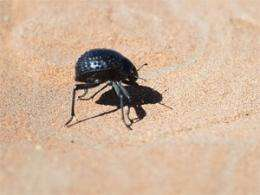 Self-filling water bottle takes cues from desert beetle