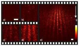 Single molecules in a quantum movie