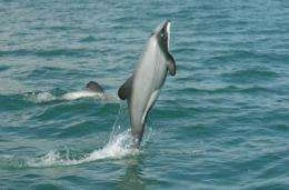 Size matters: Large Marine Protected Areas work for dolphins