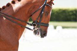 Solution proposed to suffering caused by horse nosebands