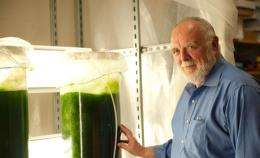 Study determines theoretical energy benefits and potential of algae fuels