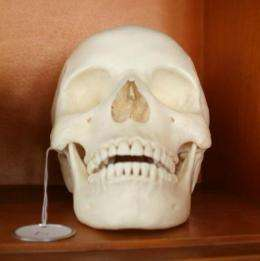 Study finds significant skull differences between closely linked groups