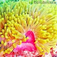 Study investigates aquatic parasites on fish