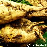 The gene that boosts sugar beet yields