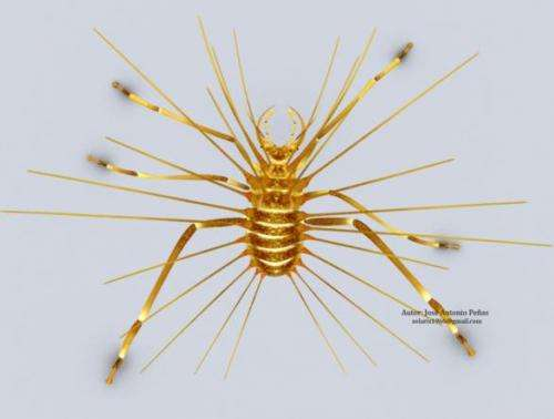 The mind-blowing Diogenes lacewing: How to store remains to survival 110 million years ago