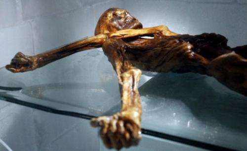 The mummy of an iceman named Oetzi, discovered on 1991 in the Italian Schnal Valley glacier