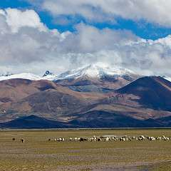 Tibetan Plateau may be older than previously thought
