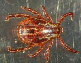 Ticks can adapt to the Spain's climatic diversity