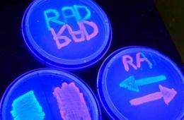 Totally rad: Scientists create rewritable digital data storage in DNA